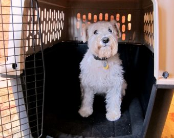 puppy sitting in doggy cage